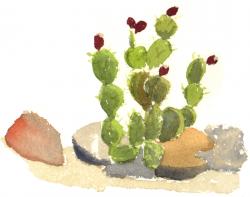 cactus full size